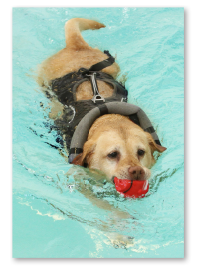 Dog Hydrotherapy Bracknell Treatments Canine