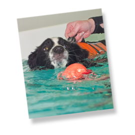 Canine Hydrotherapy Berkshire Facilities Dog